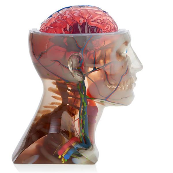 PolyJet 3D-Druck - Multimaterial-3D-Farbdruck